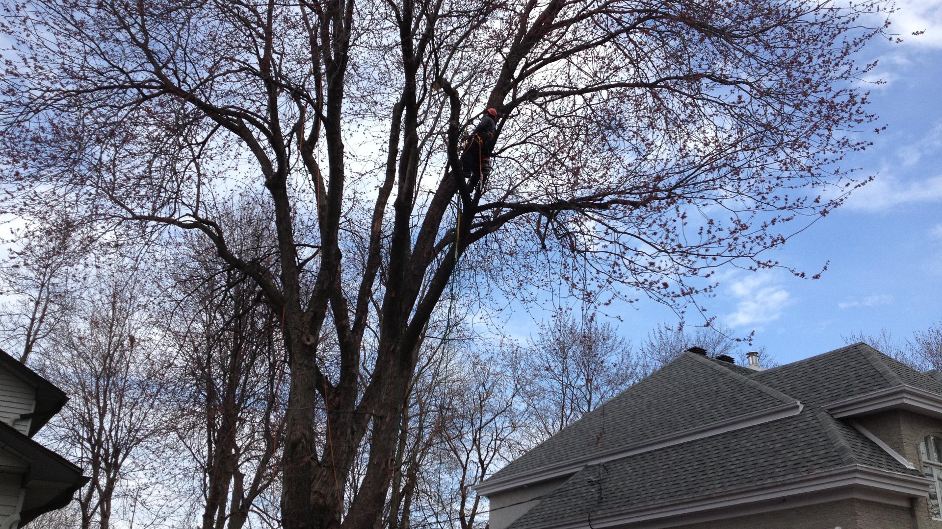 Arboriculture 101