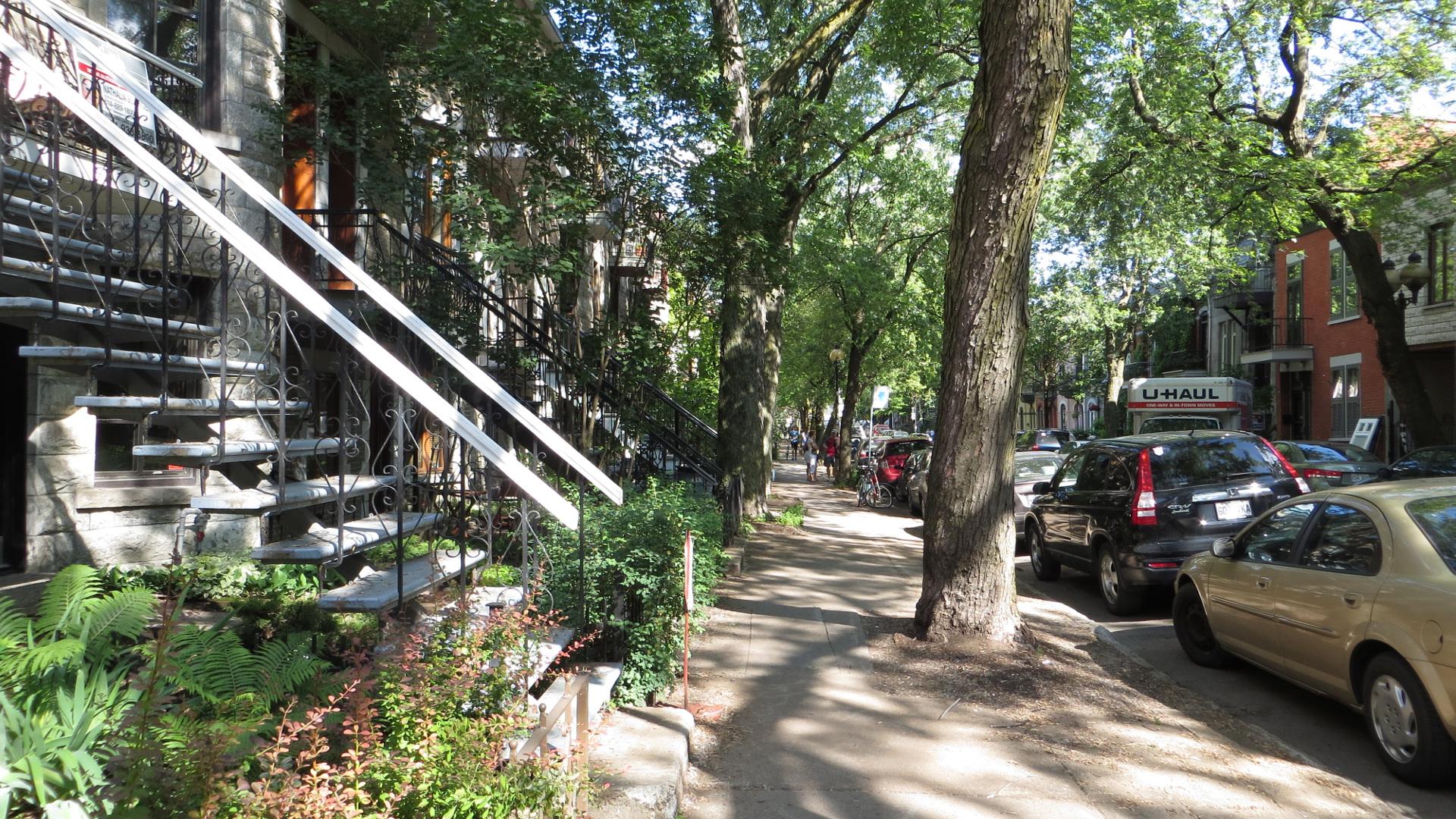 La quasi-totalité des arrondissements de Montréal touchés par l'agrile du frêne