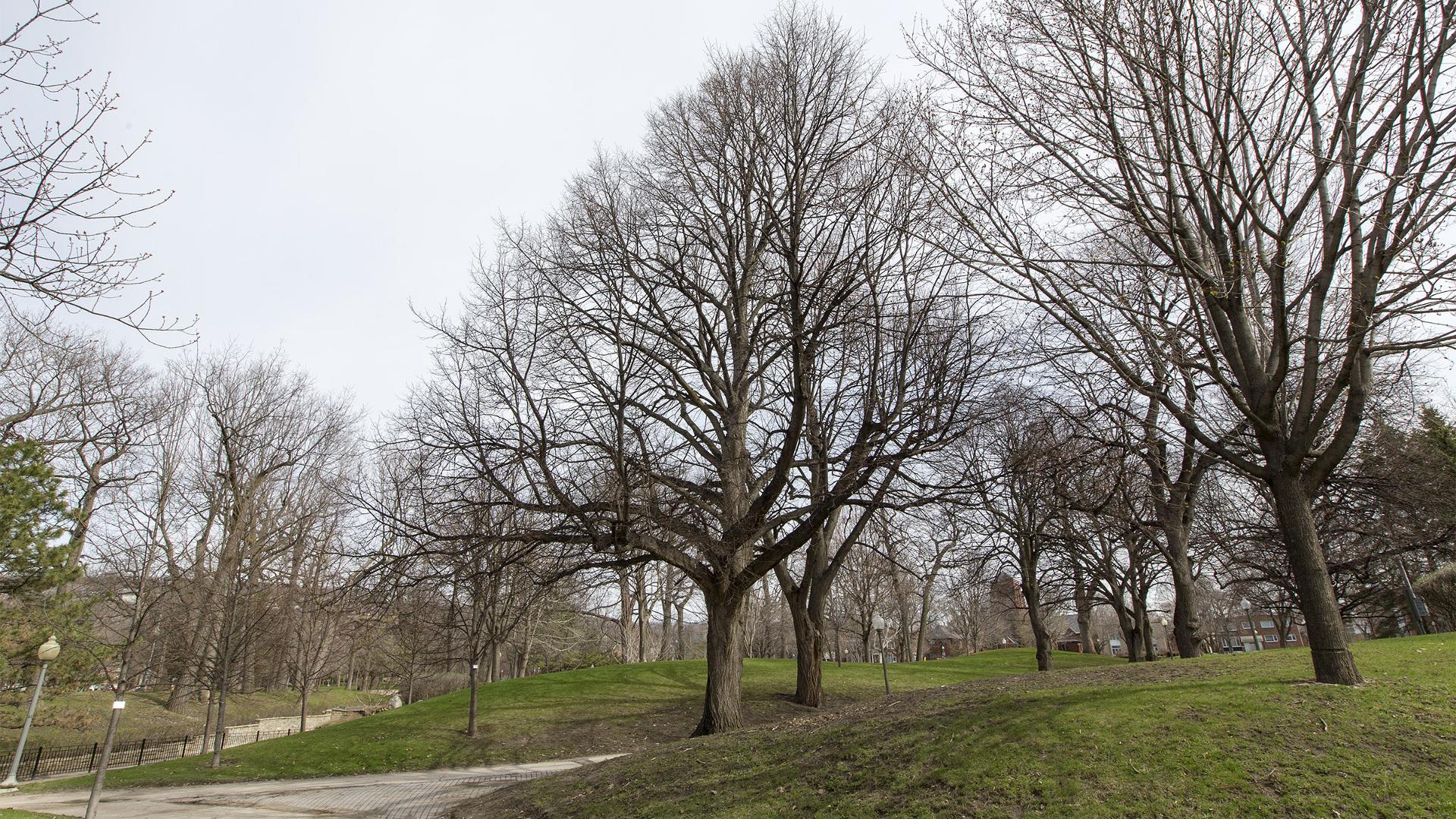 Les grandes villes du Québec font face à un dilemme arboricole