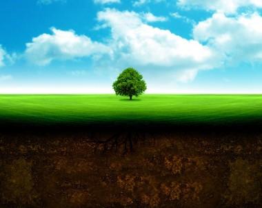 Le sol, une vie en soi