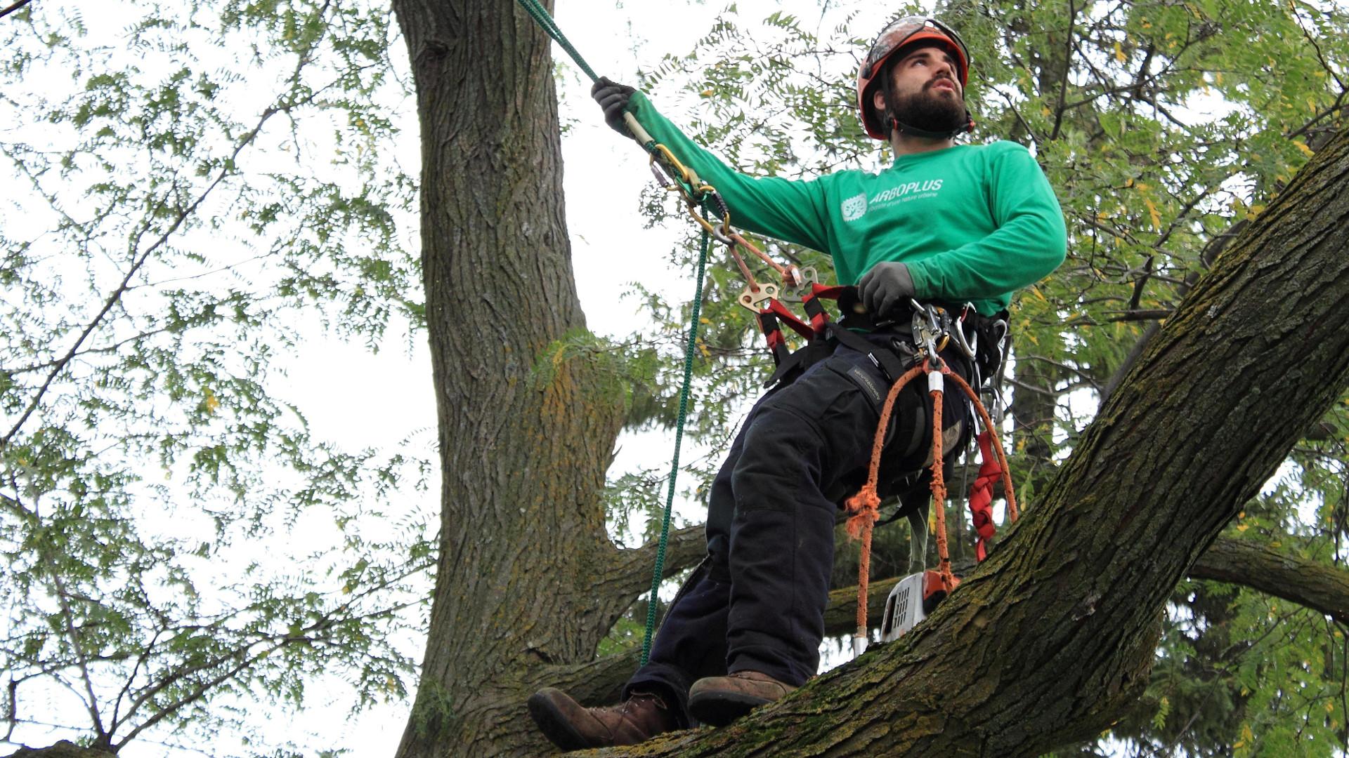 Arboriculteur - Michael Pinard