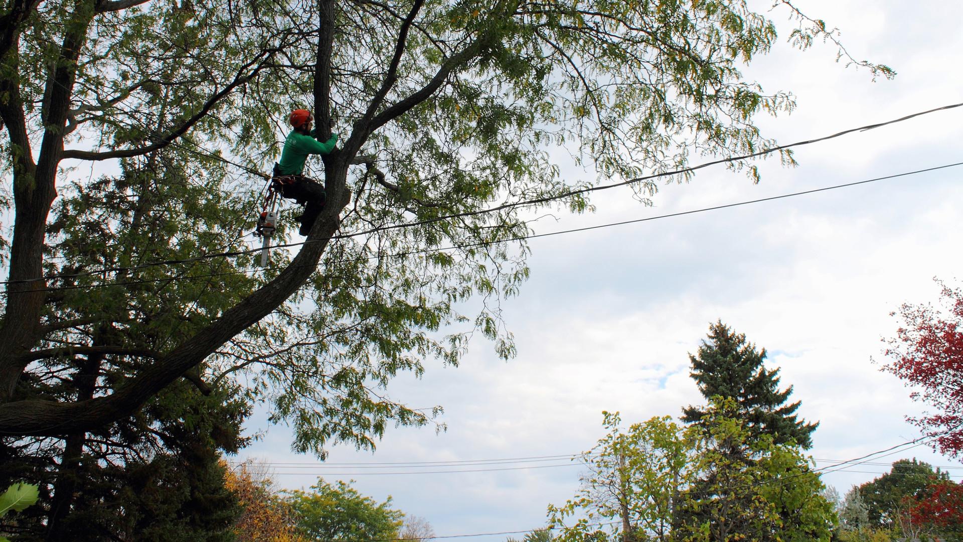Arboriculture - Déplacement dans l'arbre