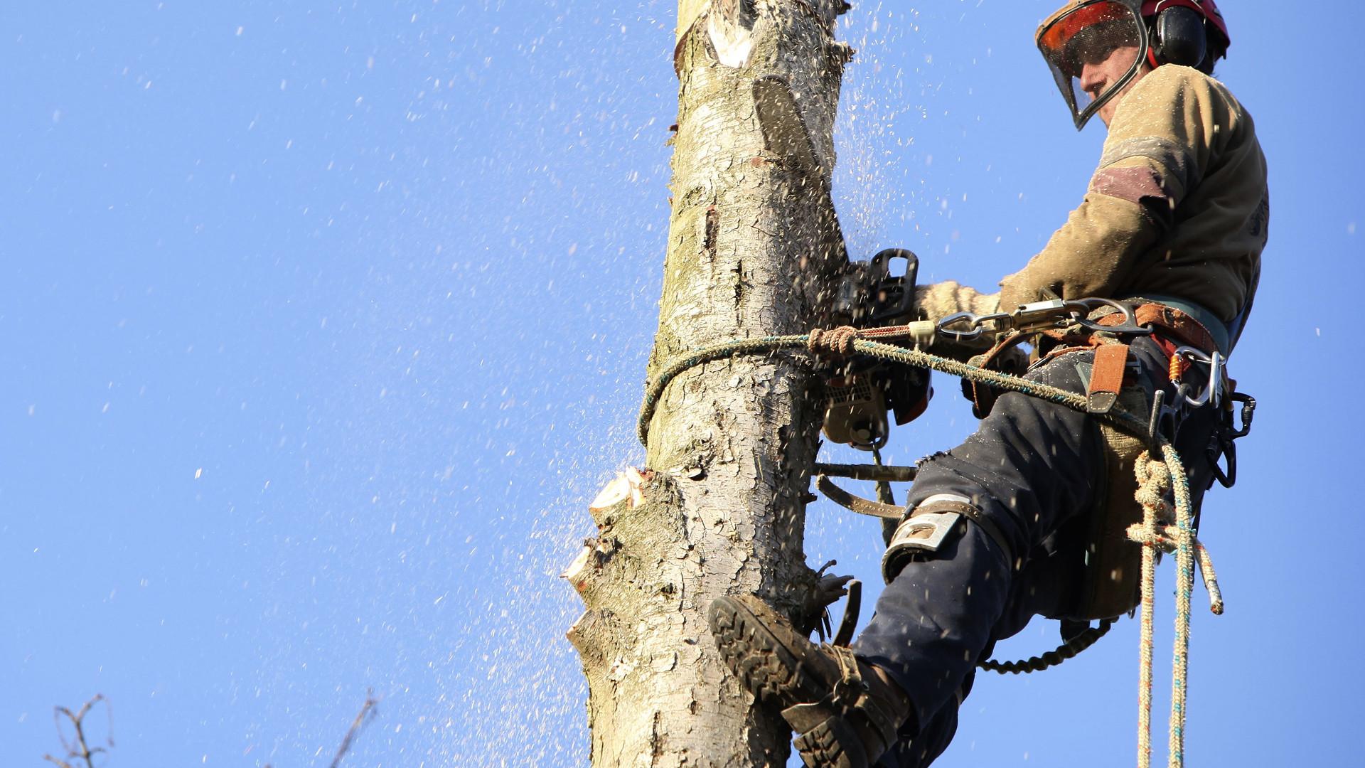 Cri d'alarme des arboriculteurs de la région de Gatineau et Ottawa