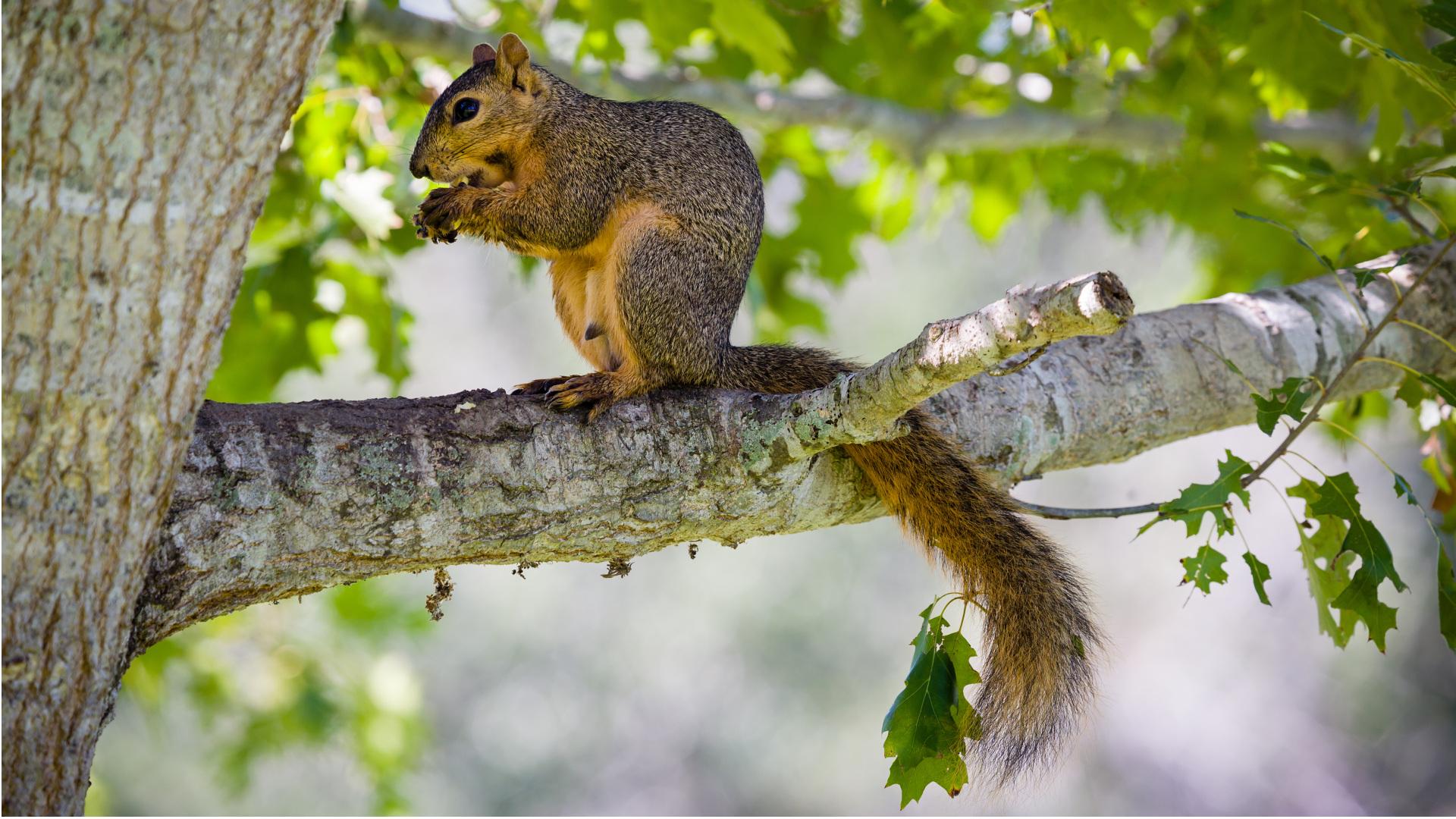 Mon arbre, notre faune - Développement durable