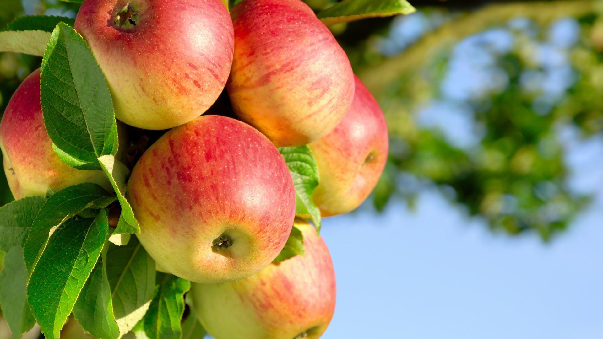La taille des arbres fruitier