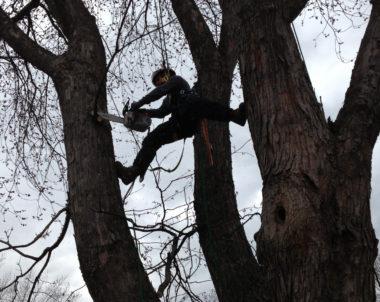 Quand élaguer un arbre