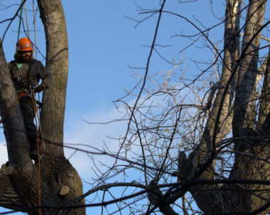 Magasiner un arboriculteur