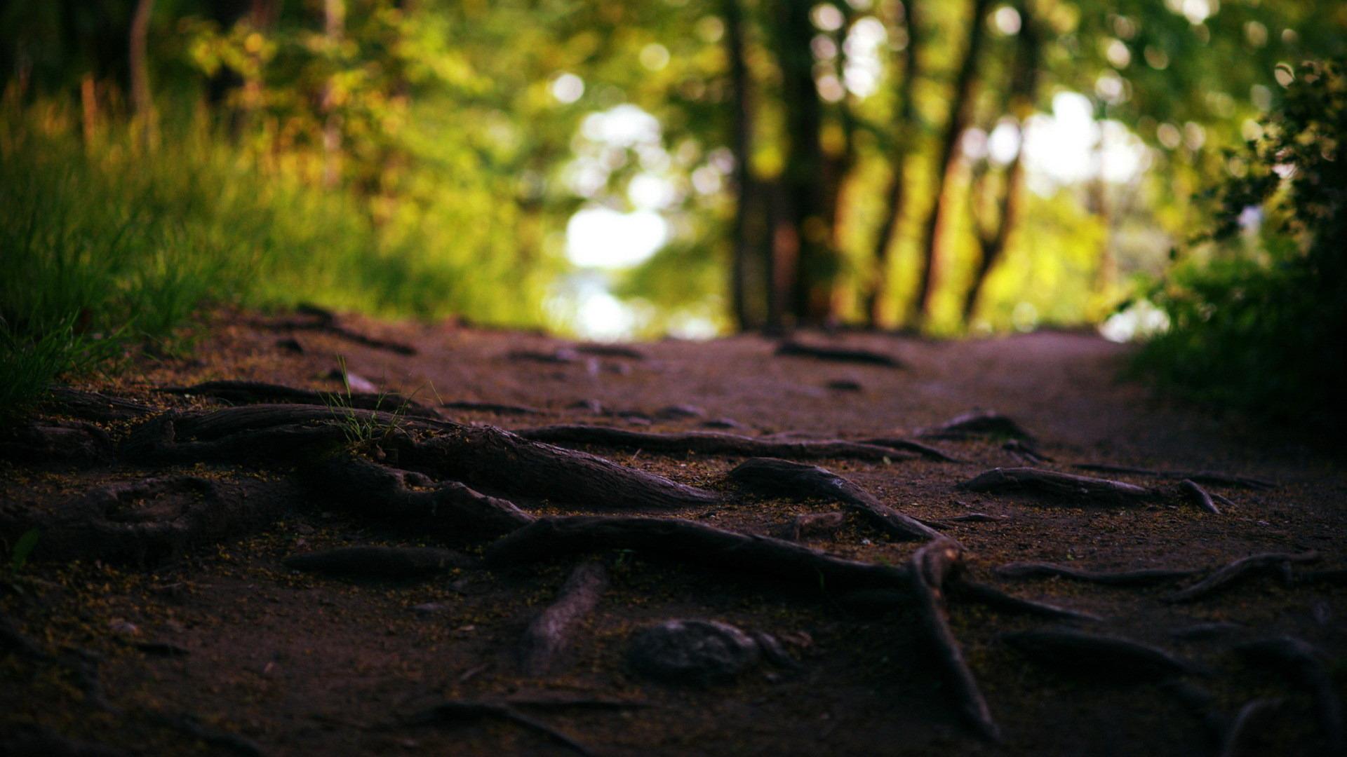 Les problèmes et risques liés aux racines d'un arbre