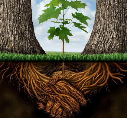 Les racines competition ou complementarité