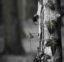 Le mal, qu'est-ce que c'est - Philosophie d'arboriculture