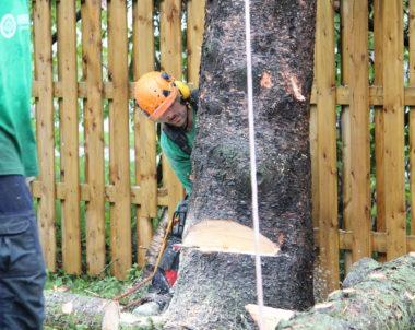 Comment couper un arbre - Comment abattre un arbre