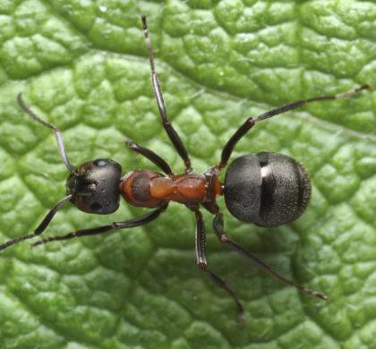 Lutte biologique contre les insectes