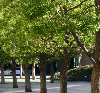 Avantages des arbres en milieu urbain