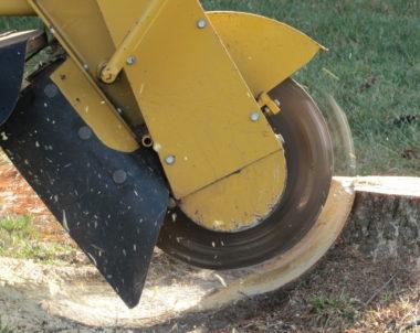 Comment enlever ou détruire la souche d'un arbre