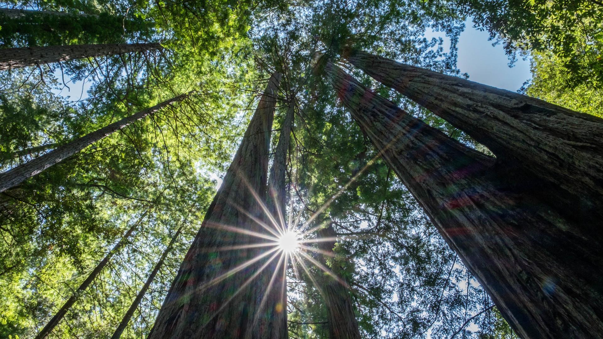 Comment mesurer la hauteur d'un arbre