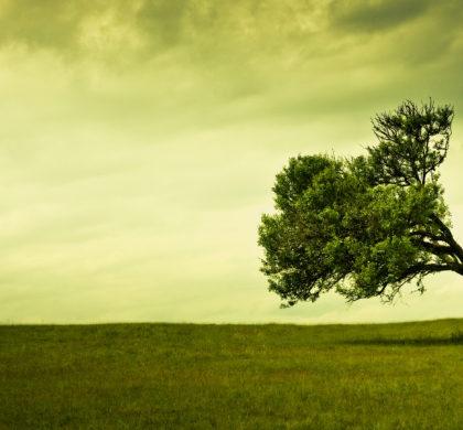 Comment redresser un arbre qui penche