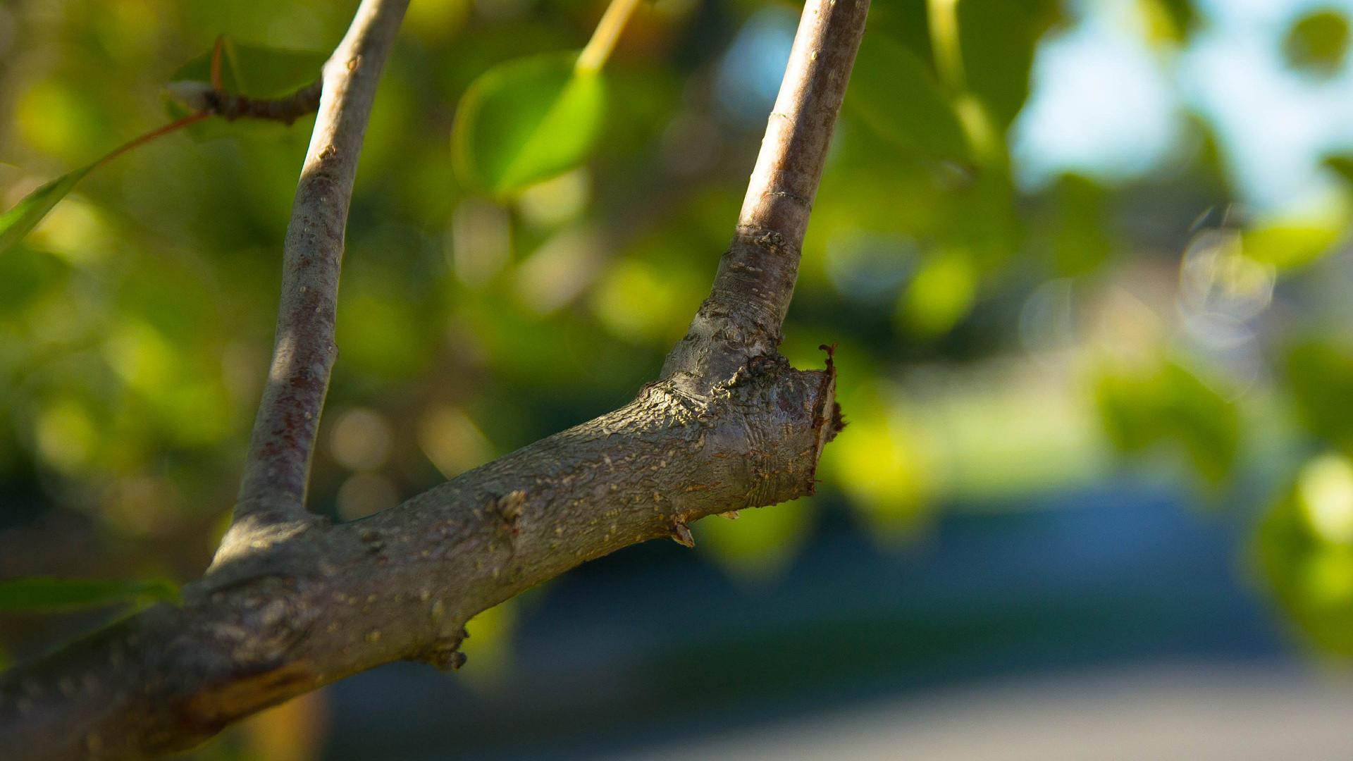 La taille d'un jeune arbre