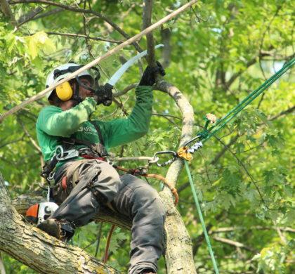 Trois outils indispensables en arboriculture