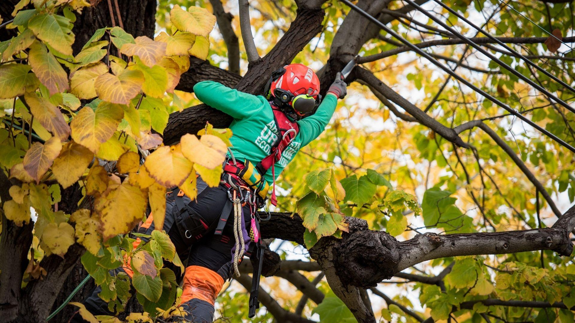 Bonnes pratiques arboricoles - Élagage respectueux de l'environnement