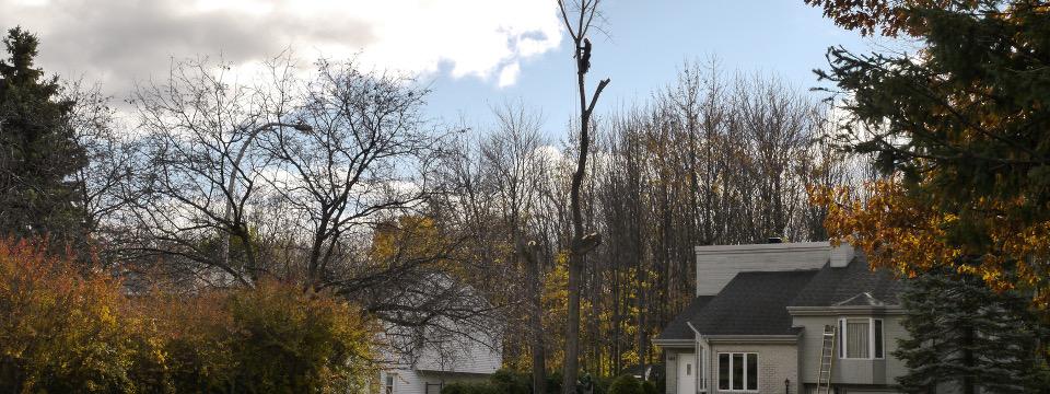 abattage arbre ville quebec
