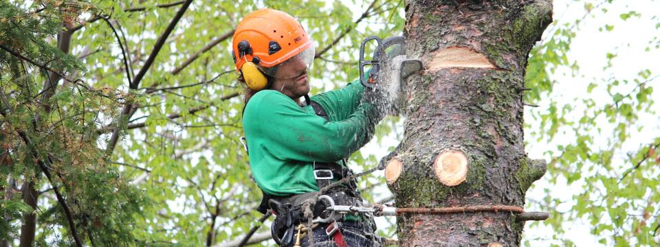 abattage arbre a quebec